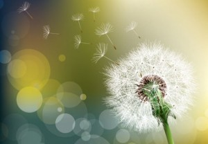 apaiser les allergies